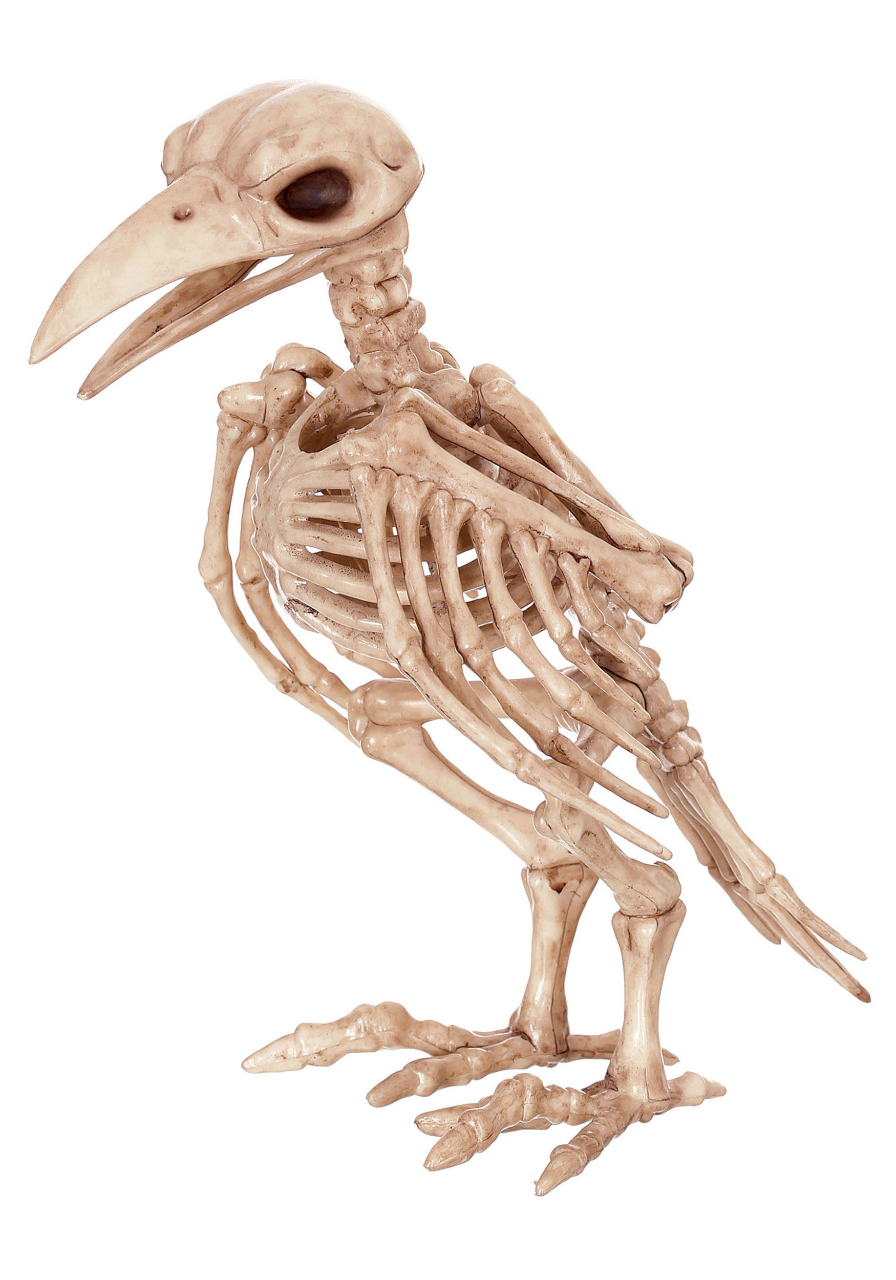 "8"" Skeleton Raven Prop"