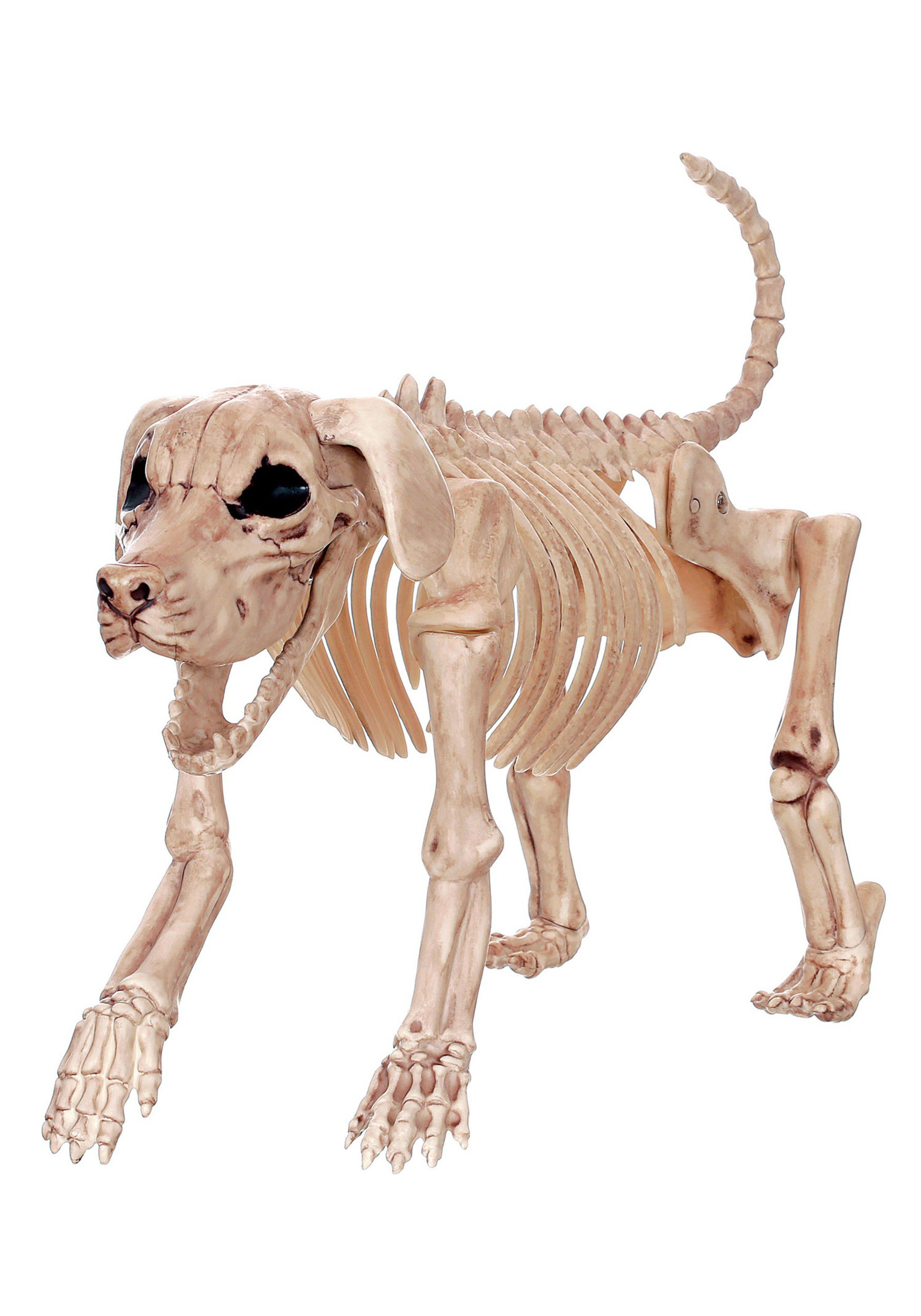 "Beagle Bonez 20"" Skeleton Dog"