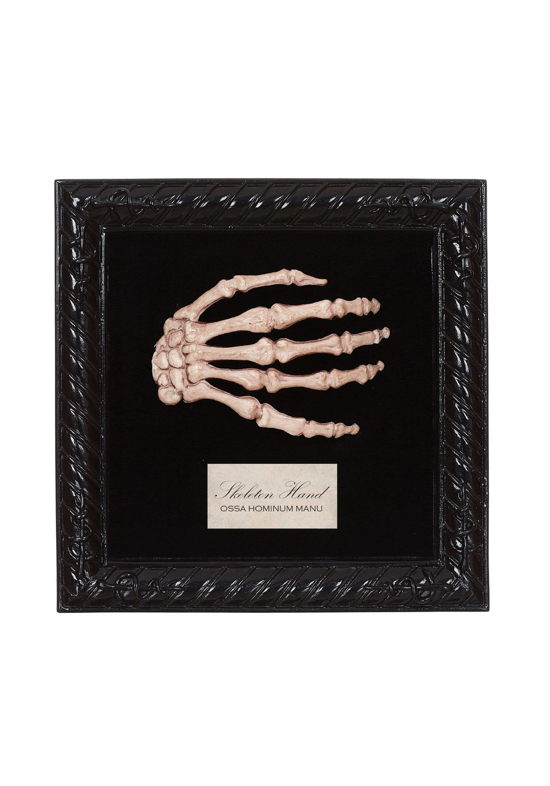 Lab Specimen Skeleton Hand